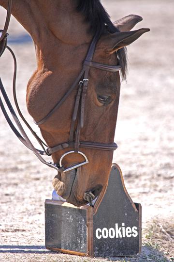 cookie detective horse