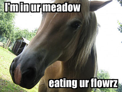 Im in ur meadow eatin ur flowers, lolhorse, funny horse photo