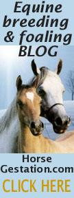 horse gestation