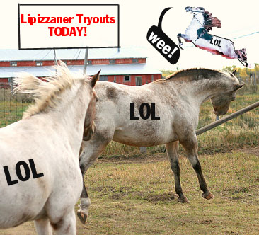 Lipizzaner tryouts