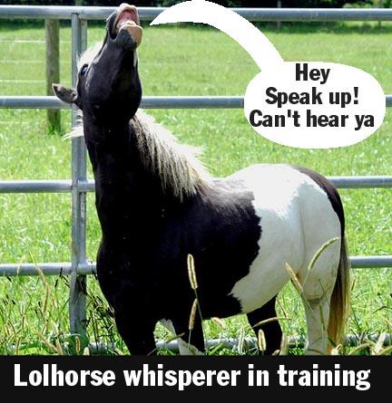 lolhorse whisperer in training